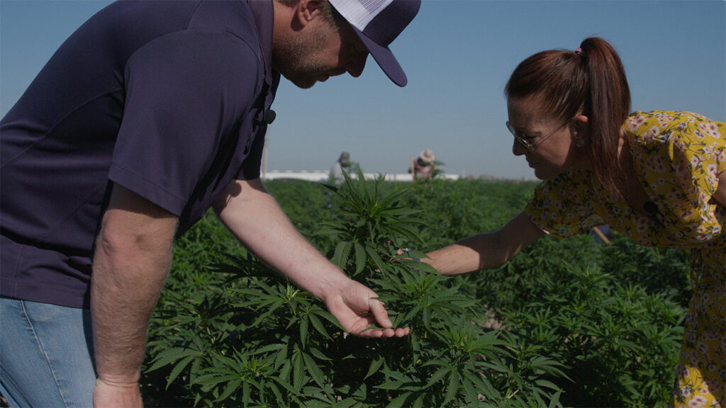 two people inspect a hemp plant on a farm in the video series Hemp Already